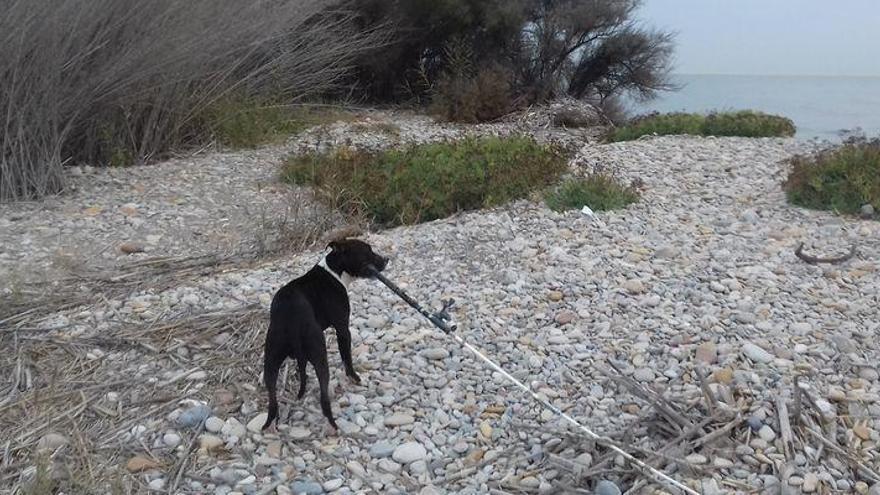 Aumenta la presencia de perros abandonados en el Paisaje Protegido de la Desembocadura del Millars