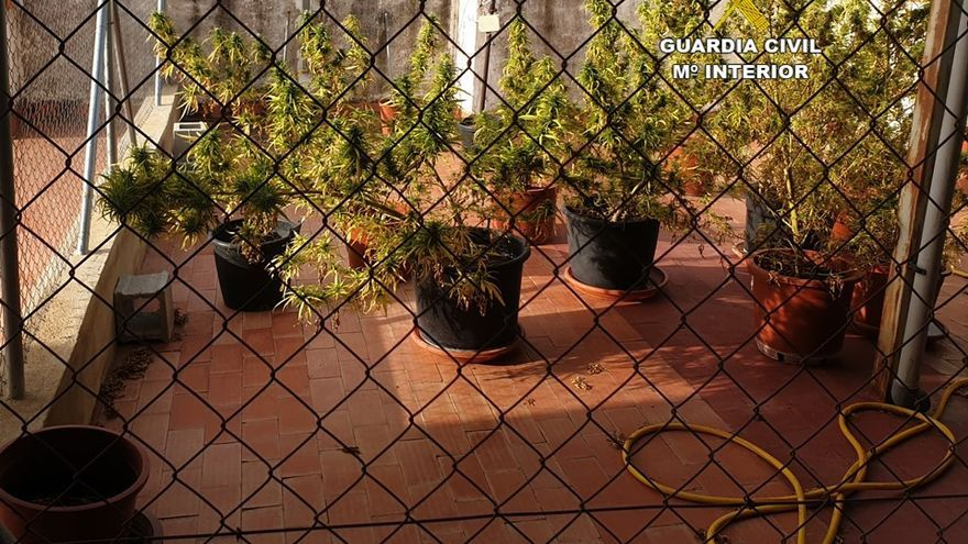 Dos investigados en Callosa d'en Sarrià por cultivar marihuana en su casa
