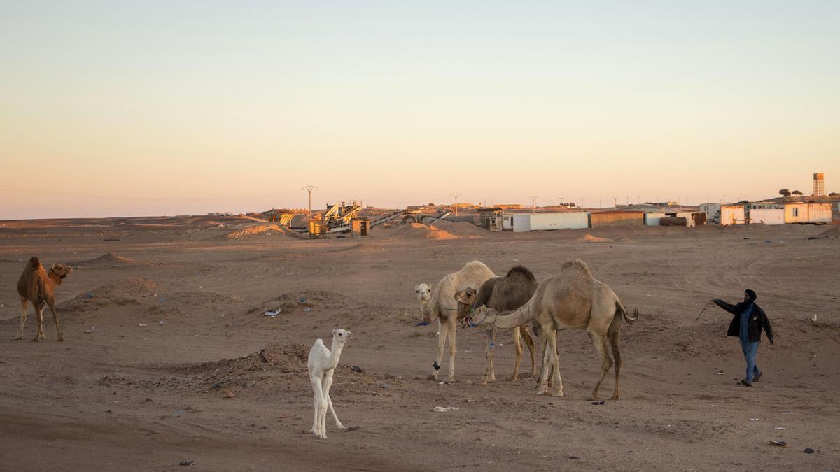 Un hombre junto a unos camellos en Rabuni, en el Sáhara.