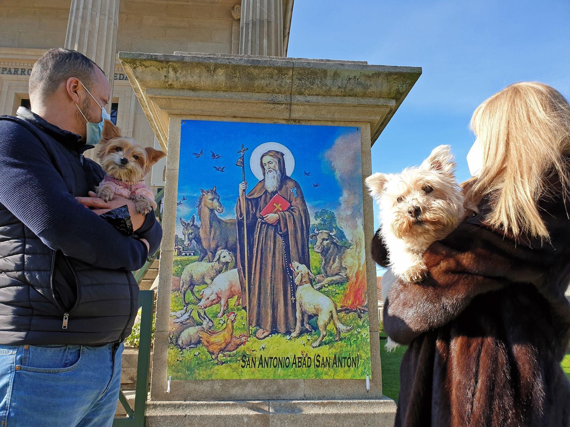 Una bendición canina por San Antón