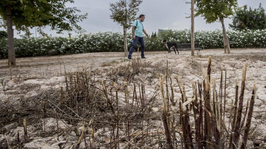 Quejas al herirse los perros en el pipicán de la Playa de San Juan
