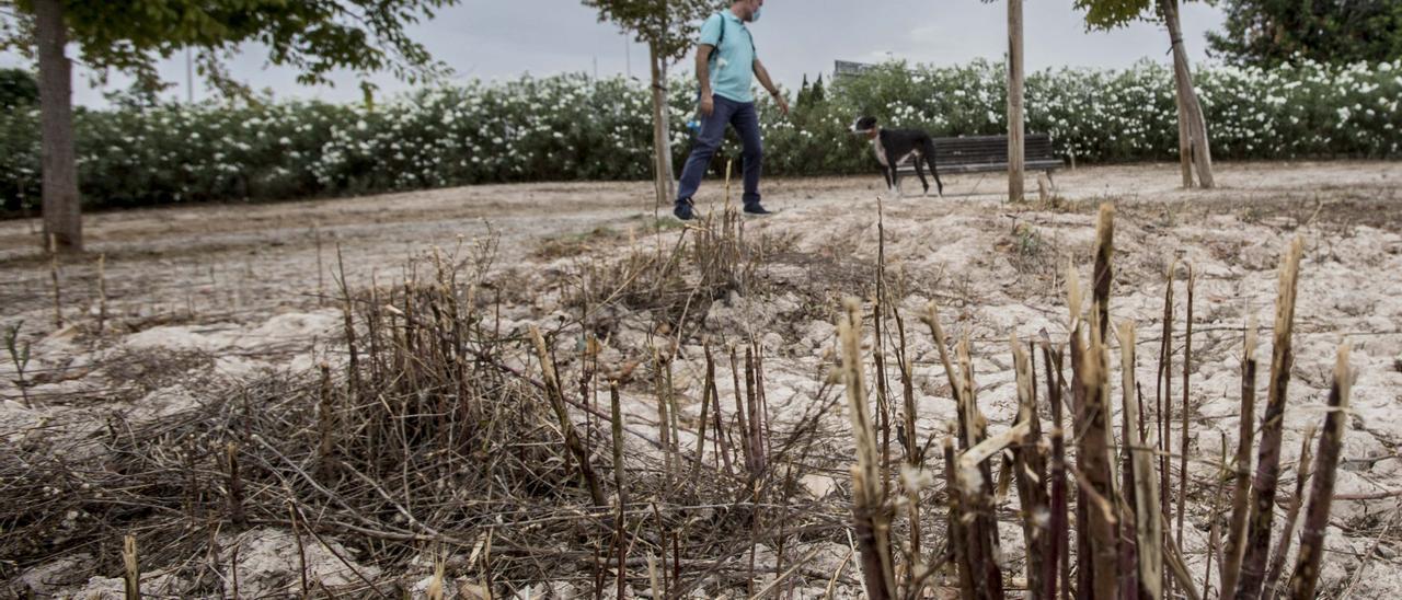 Las cañas de las que alertan los usuarios del parque de perros por el riesgo de heridas o caídas.