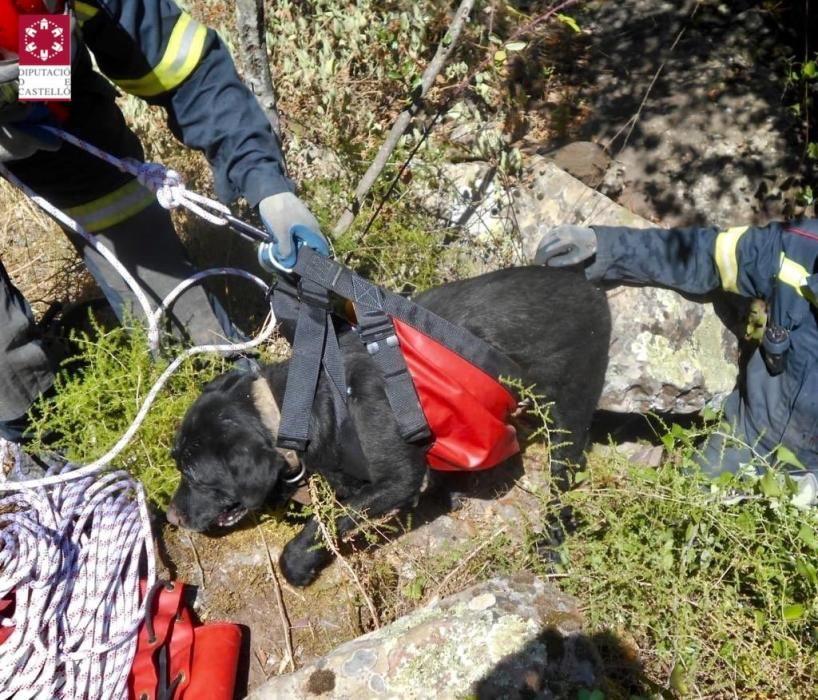 Los bomberos rescatan a un perro que cayó por un barranco en Eslida