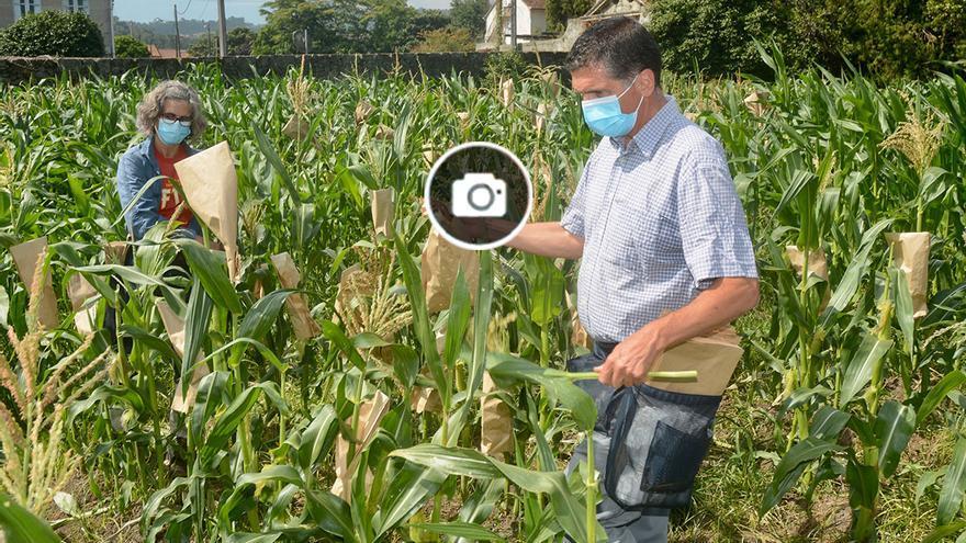 Investigadores gallegos buscan cultivos adaptados genéticamente al cambio climático