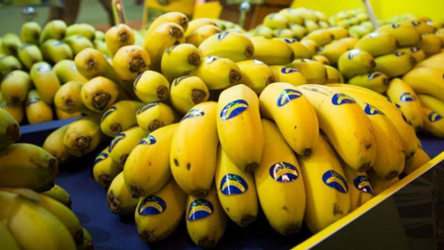 Agroseguro abona 11 millones de euros por daños en el plátano de Canarias