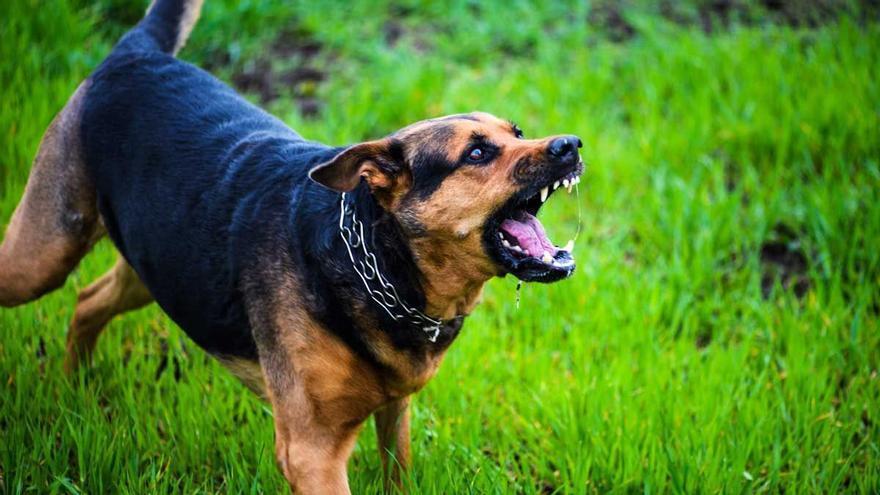 Amenazan a un hombre con un perro de raza peligrosa para robarle el móvil