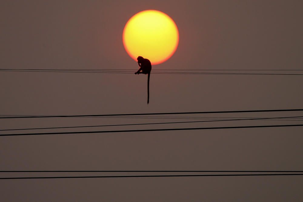 A monkey sit on a wire during sunset in front of ...