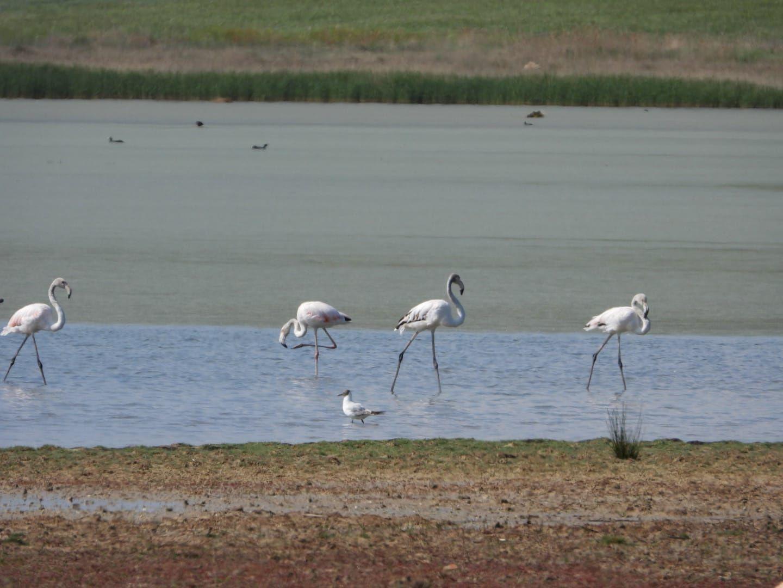 Aves en la Laguna de Gallocanta