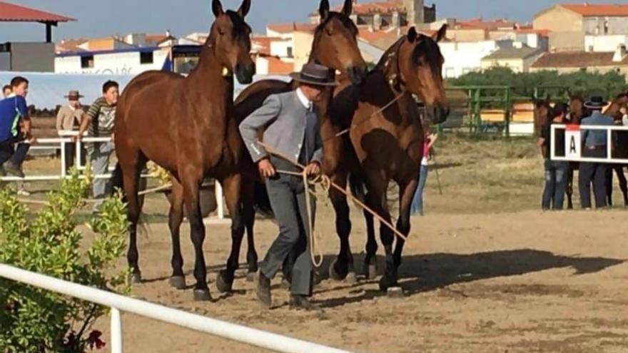 Albalá: Sentimiento y tradición a caballo