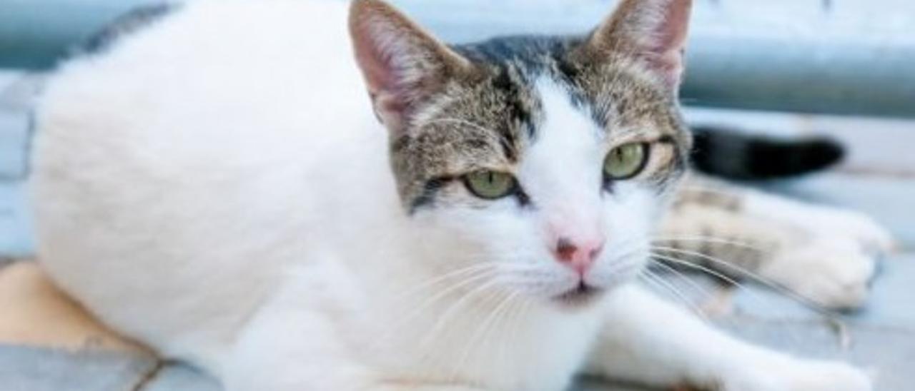 Para un gato la calle es un constante peligro