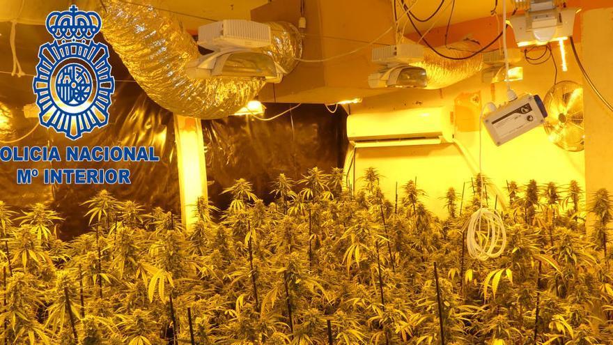 Dos detinguts i dos investigats per una plantació de marihuana a Vilanova del Camí