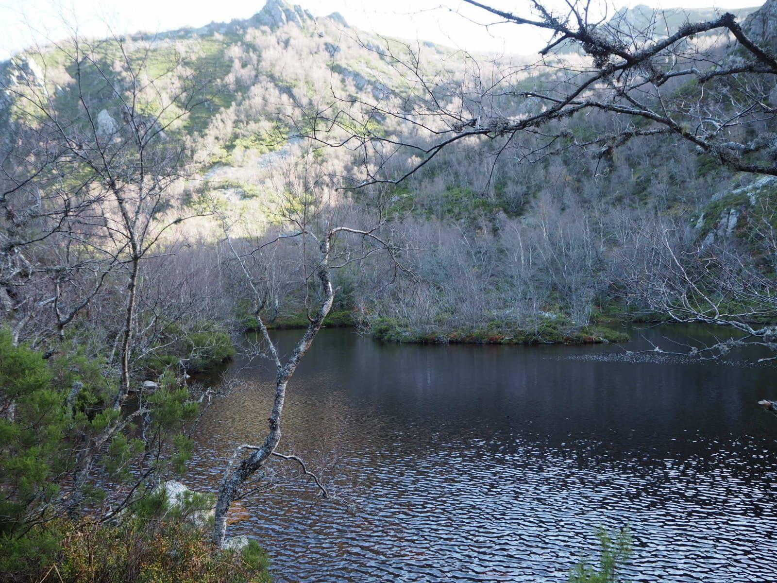 El mágico bosque de Muniellos