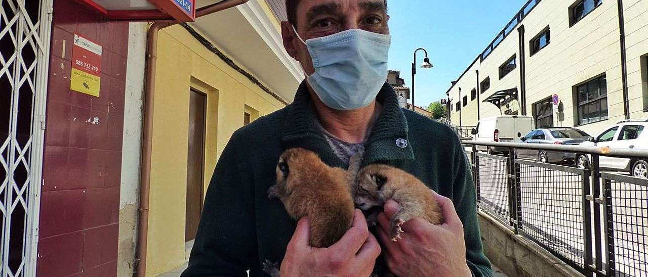 """""""Sasha"""" y """"Zar"""", los linces de Cangas del Narcea, fueron padres de tres cachorros"""