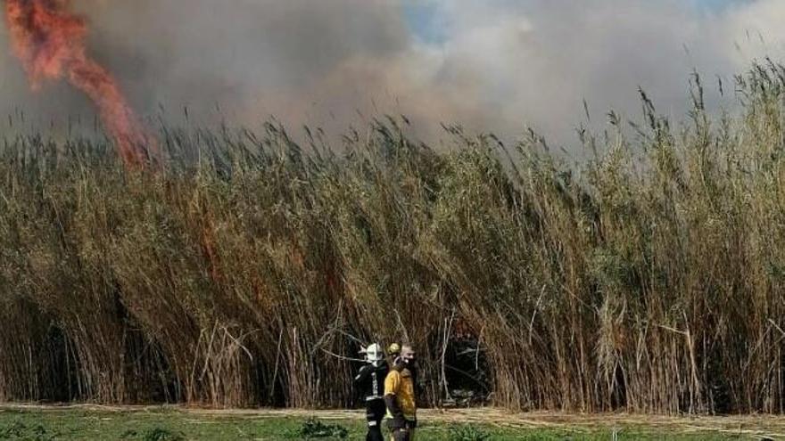 Un incendio quema casi media hectárea de cañaveral en sa Pobla