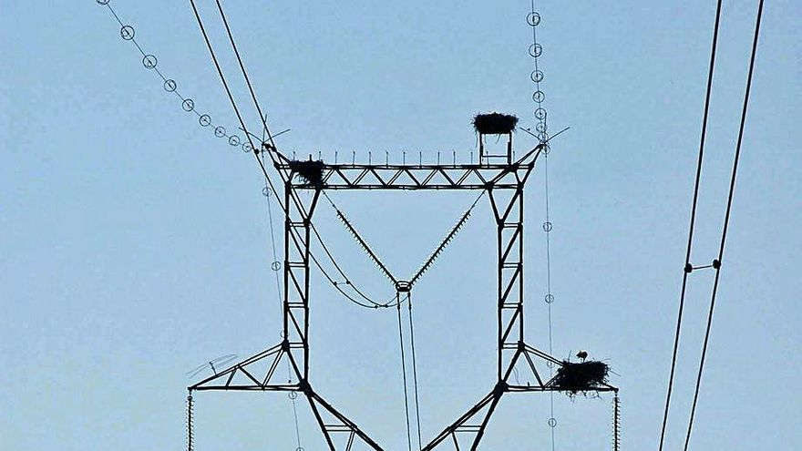 Forestalia quiere llevar al País Vasco energía 'verde' producida en Zaragoza