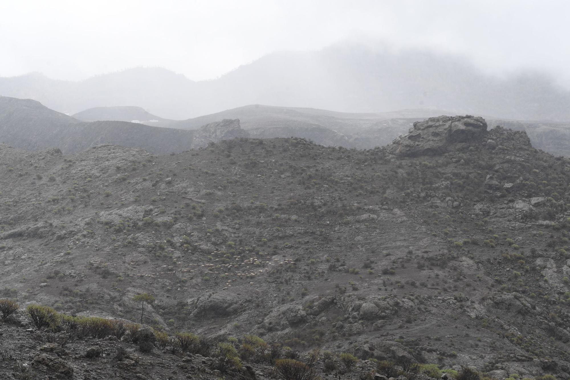 Las lluvias vuelven a caer en Gran Canaria