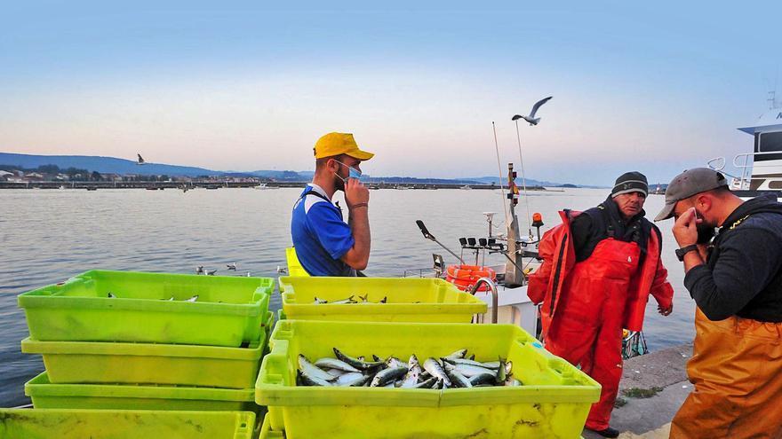 La sardina espera al cerco a partir del lunes