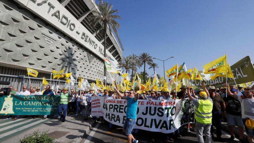 Manifestación en defensa del olivar andaluz en Sevilla