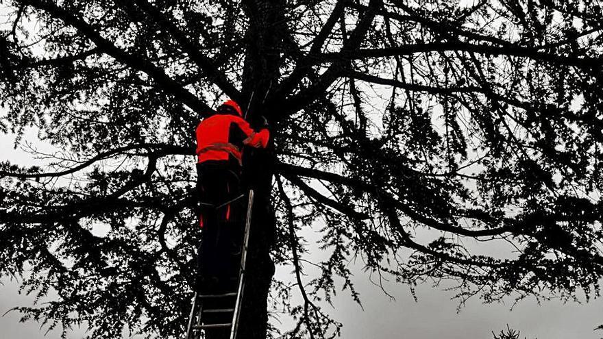 Emerxencias de Cuntis retira en un solo día 14 nidos de velutinas