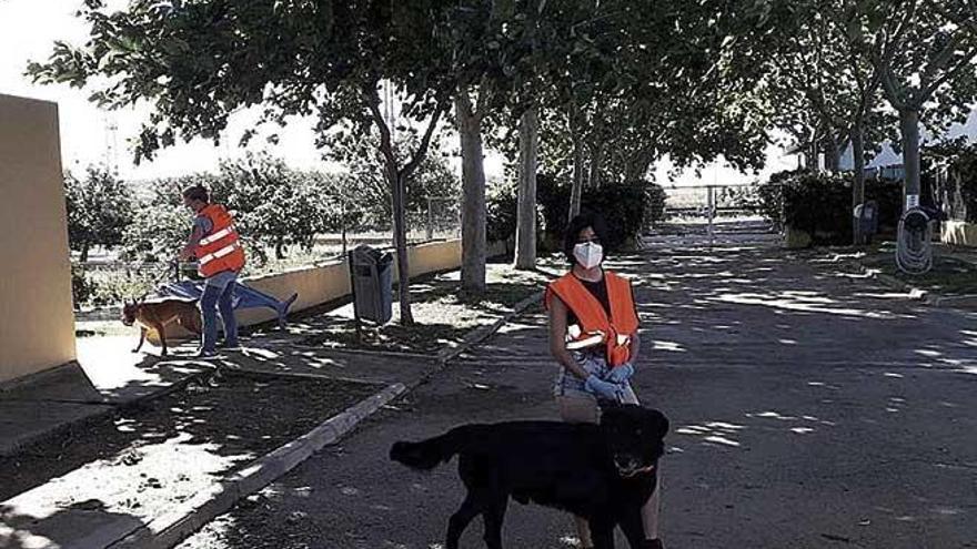 Los voluntarios regresan a Son Reus