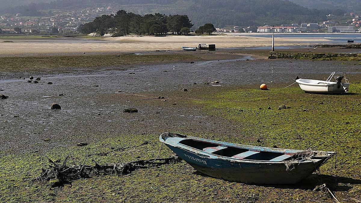 El estuario de A Foz recibe en esta época del año a cientos de aves migratorias.