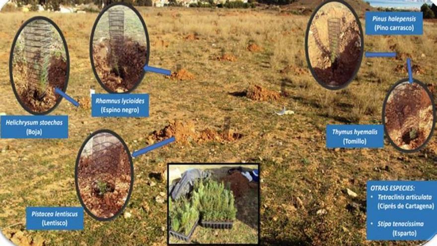 Más de 33.000 euros para zonas verdes en El Llano del Beal