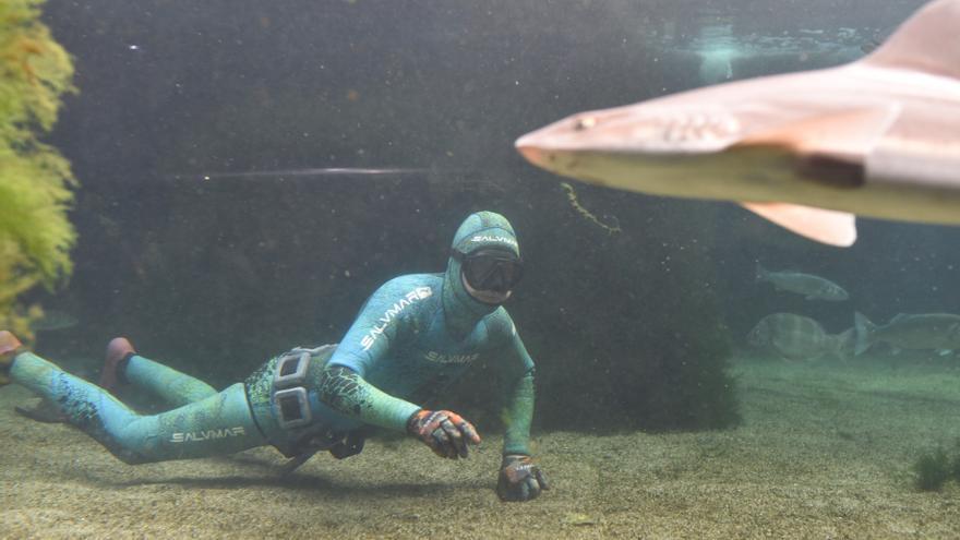 O Grove, donde nadar entre tiburones o pasmarse con medusas