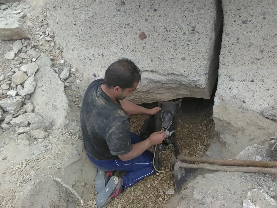 Rescate de perro cazador entaliscado en Abades
