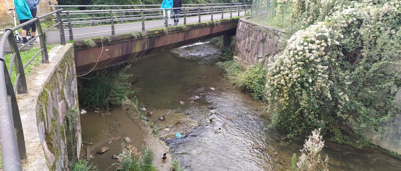 Un grupo de patos en el tramo afectado por la recuperación ambiental.