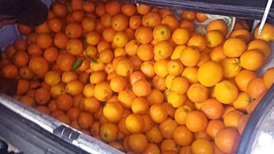 Sorprenden a una pareja de Paiporta en Sagunt con 400 kilos de naranja robada