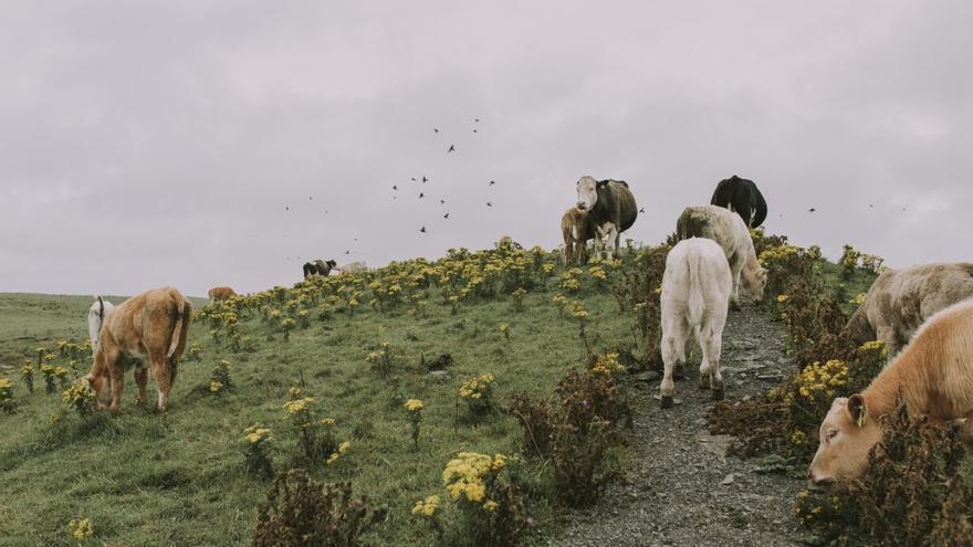 'Vacas bombero': así ayuda el ganado a evitar incendios en Andalucía