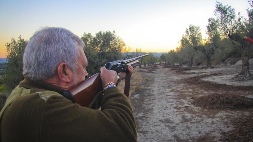 """Habilitan la caza del jabalí """"para evitar daños en la agricultura y propagación de enfermedades al ganado"""""""