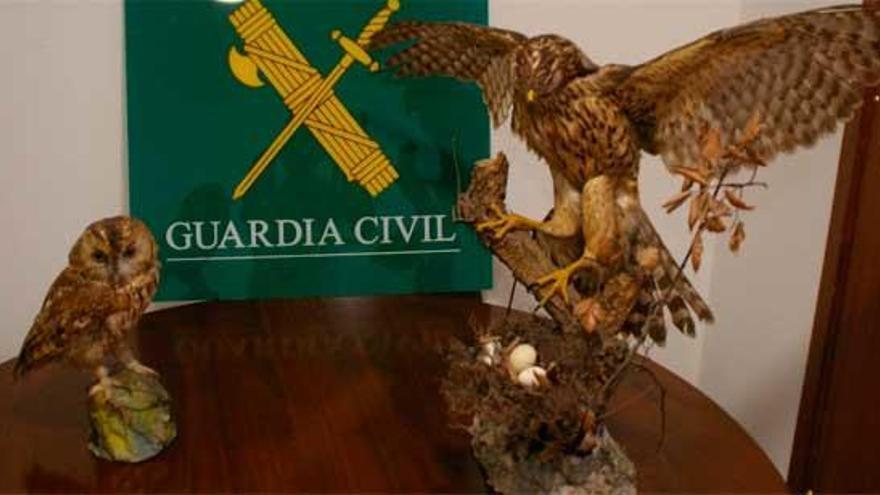 Hallan dos aves rapaces protegidas puestas a la venta en A Coruña
