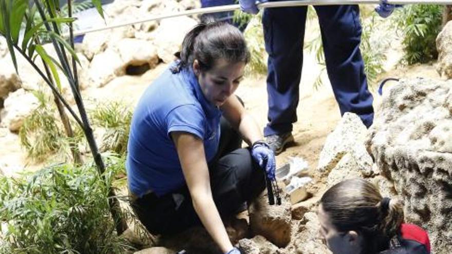 Un tiburón cebra nacido en cautividad en Canarias se entrena para ir solo al veterinario