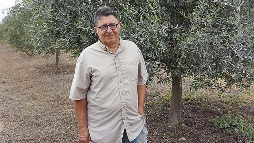 "Joan Mayol Serra: ""Nadie se está lucrando por elaborar aceite en Mallorca"""