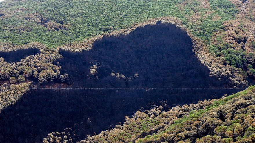 Estepona y Casares, los municipios con más superficie afectada por el incendio de Sierra Bermeja