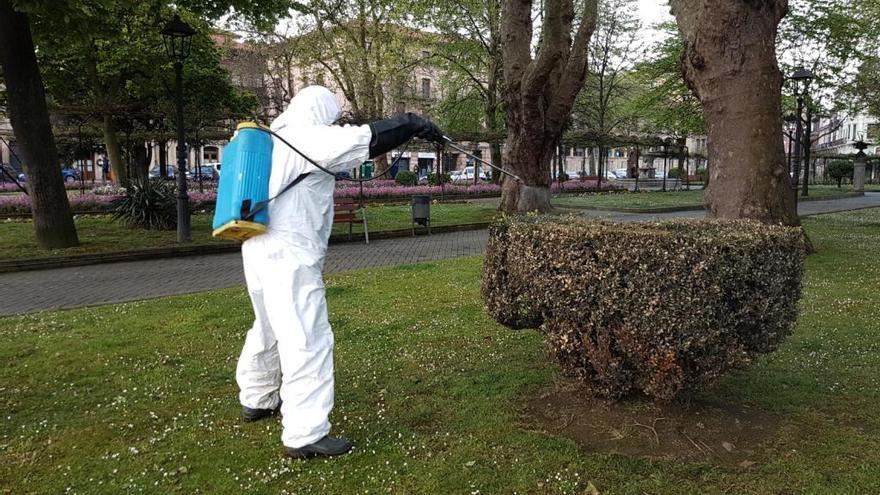 Una plaga de polilla del boj ataca los jardines históricos de Avilés