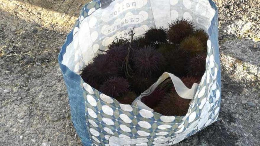 Multan a un furtivo que extrajo 11 kilos de erizo en una playa de Vigo