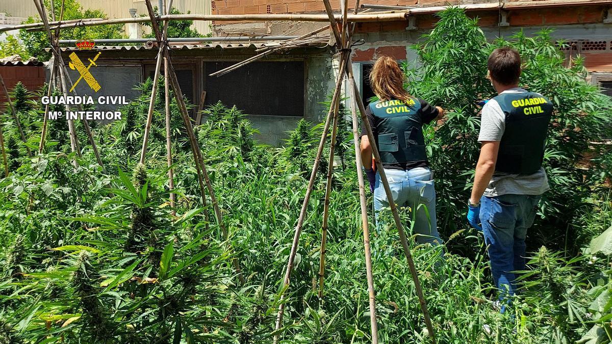 Dos agentes revisan la plantación hallada en la casa de Benicarló.