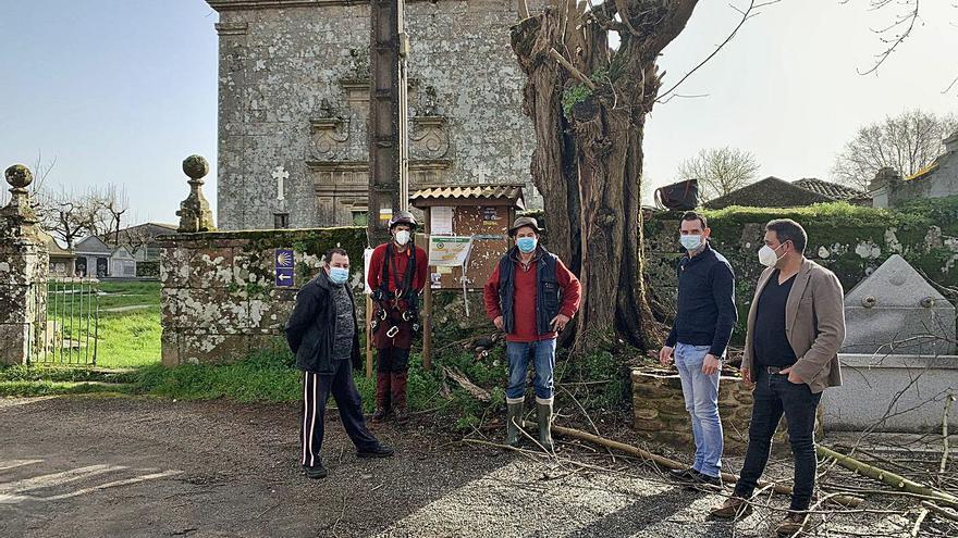Talan una falsa acacia en el muro de la iglesia de Donsión