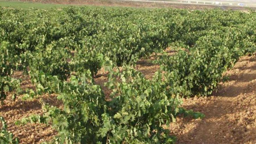 Las ayudas asociadas al COVID-19 fragmentan al sector del vino y evidencian la sobreproducción