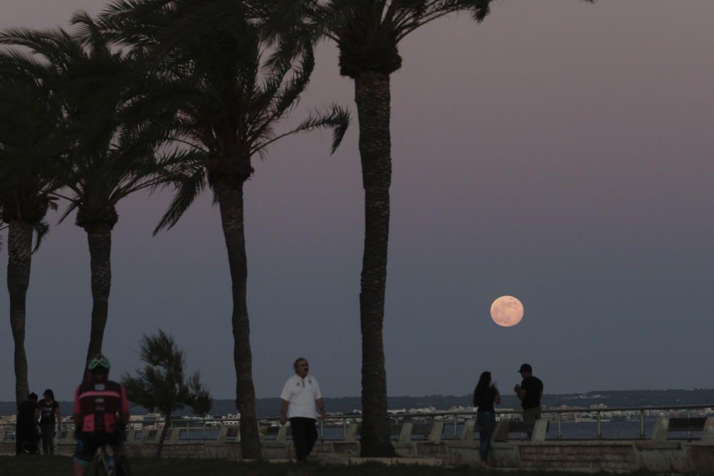 Der Erdbeermond verzückt Mallorca