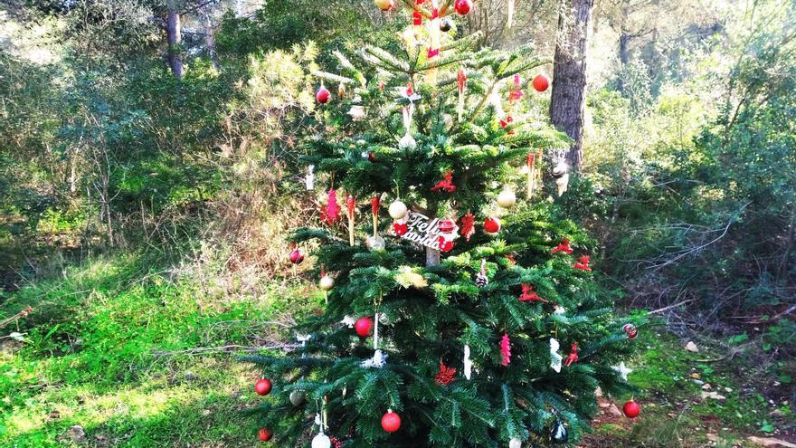 Un árbol de Navidad en el corazón del bosque en Xàbia