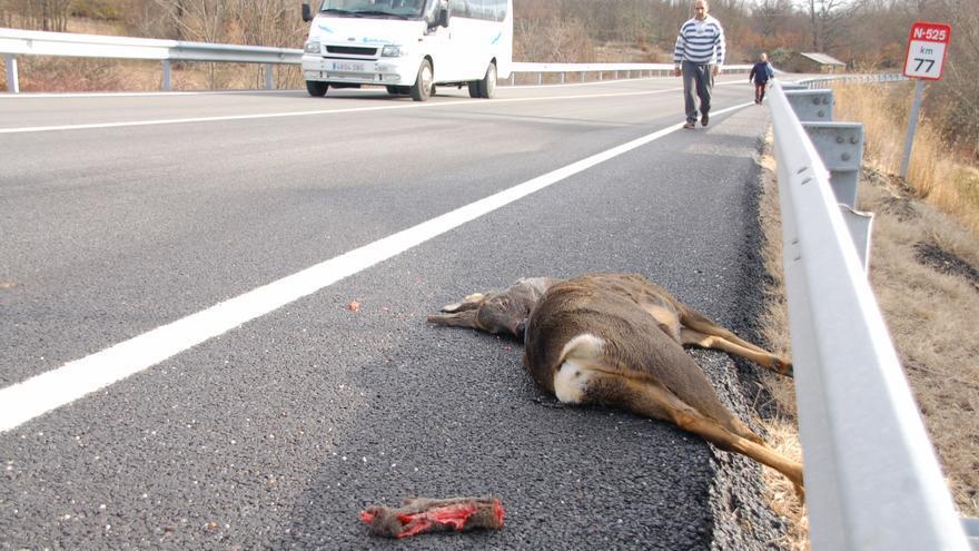 Estas son las carreteras de Zamora donde la fauna provoca más accidentes