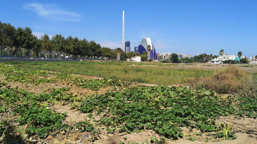 Los productos se cultivan en la huerta de la ciudad de València