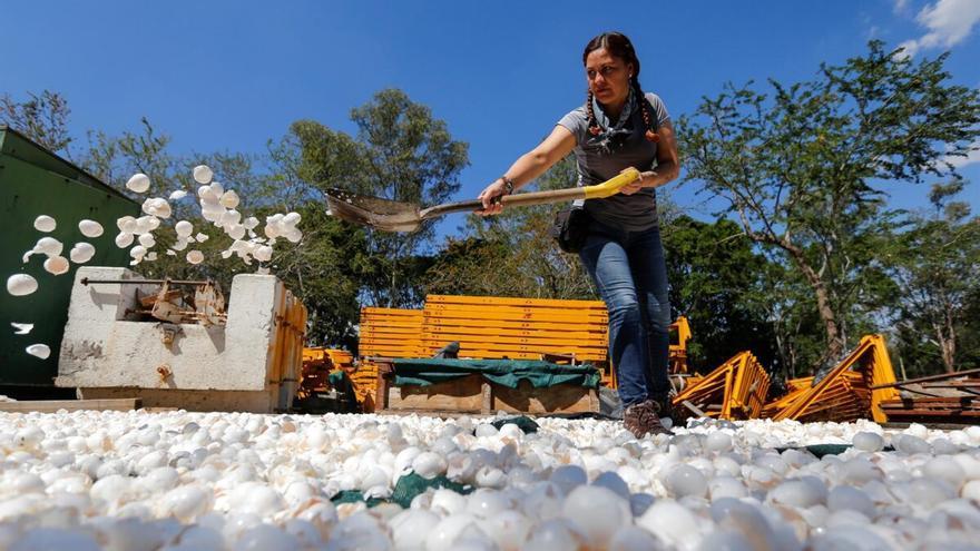 México usa cáscara de huevo para descontaminar sus ríos