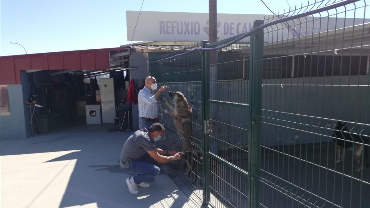 Los concejales visitaron el refugio de animales de Pontevedra