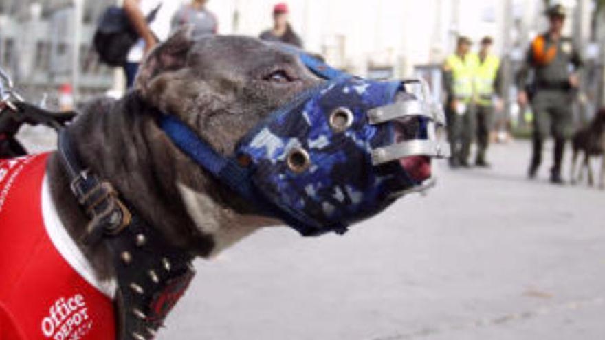Muere una mujer en La Palma tras ser atacada por su propio perro