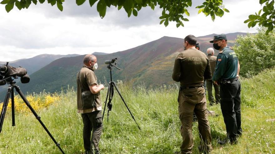 El oso que atacó a una mujer en Asturias reaccionó con zarpazos al verse sorprendido