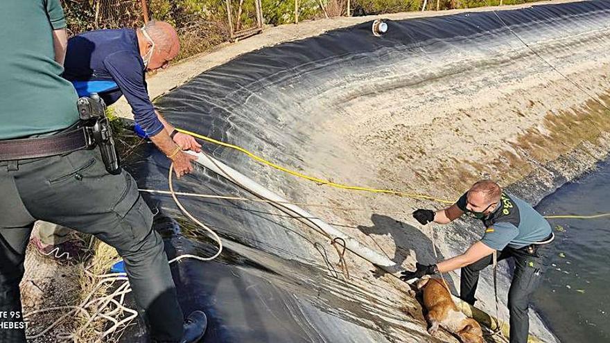 Salvan a cuatro perros de una balsa de riego en Villalonga